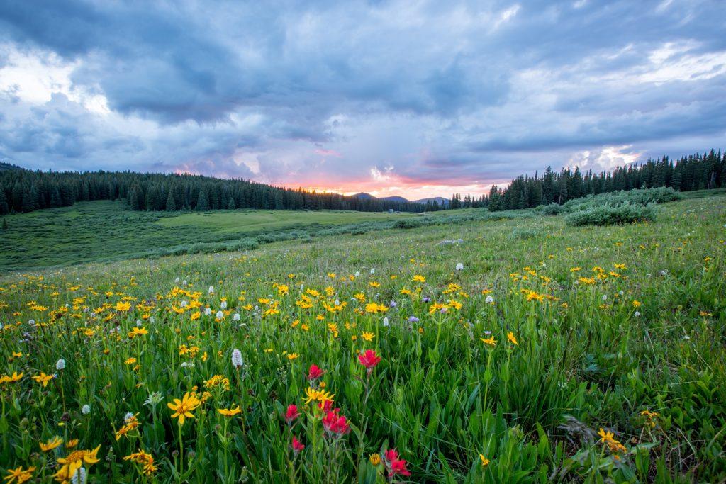 Bunte Blumenwiese im Morgengrauen