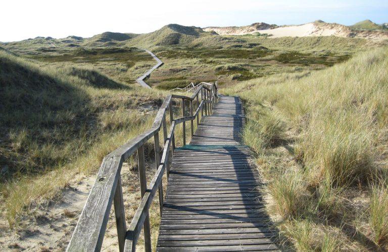 Zwischen Dünen geht ein langer Steg entlang