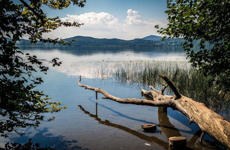 Baumstamm in Laacher See vor Hügeln