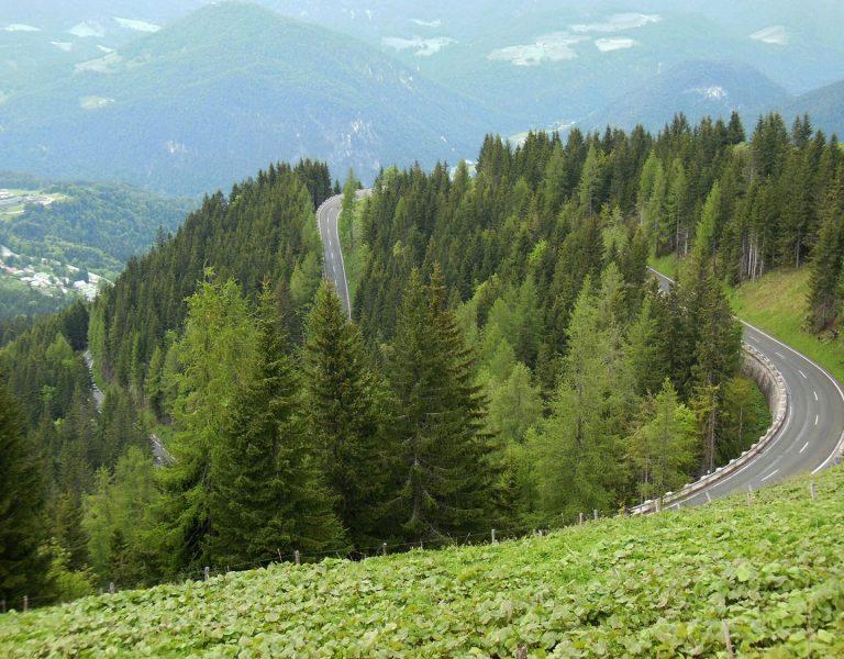 Serpentine der Roßfeldstraße auf Berg zwischen Bäumen